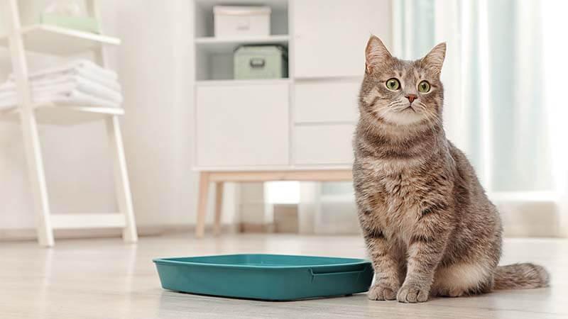 Cara Mencuci Pasir Kucing