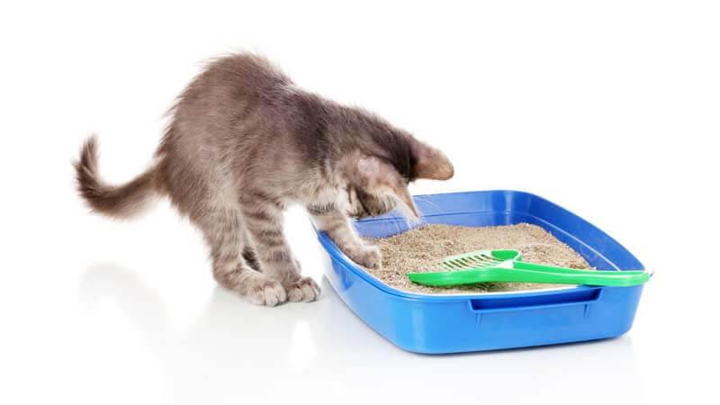 cara membersihkan pasir kucing