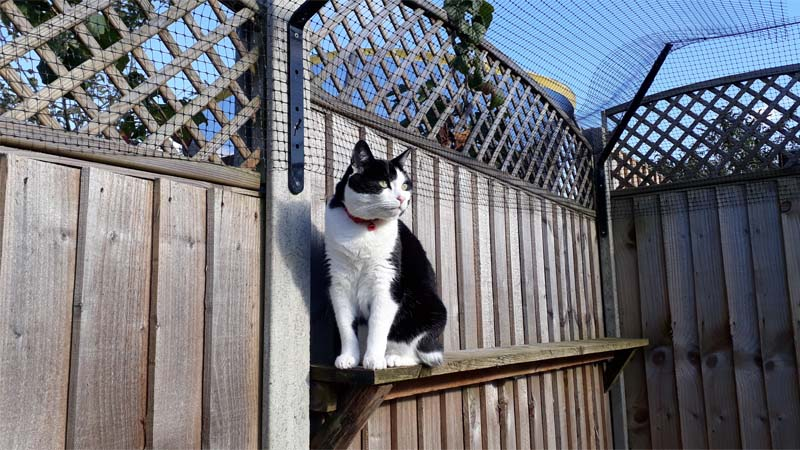 cara mengatasi kucing birahi tanpa kawin