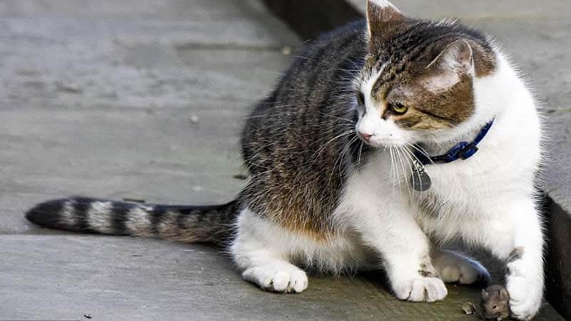 Kucing Jalanan