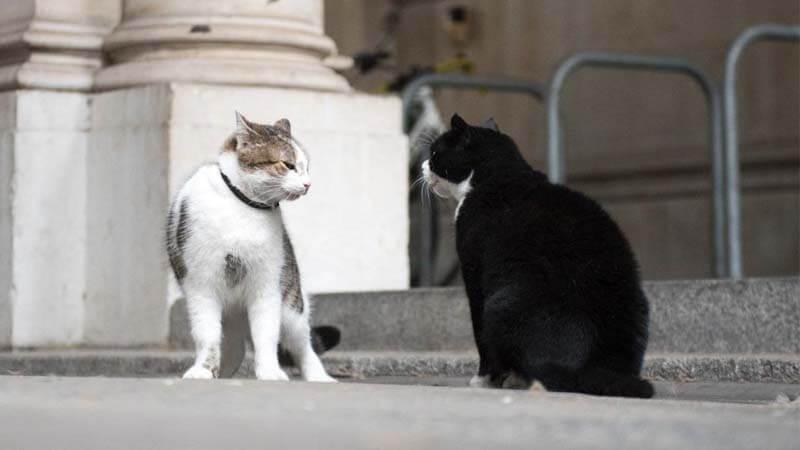 Macam Macam Kucing Kampung