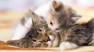 Cara Mengetahui Umur Kucing
