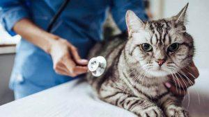 Cara Mengobati Flu Kucing