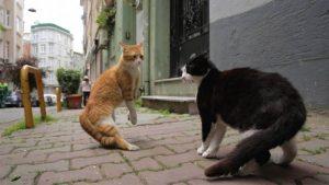 Tak Perlu Kasar, Ini Cara Mengusir Kucing yang Baik dan Ampuh
