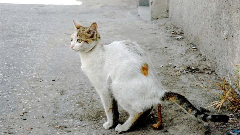 Cara Mengusir Kucing Buang Kotoran