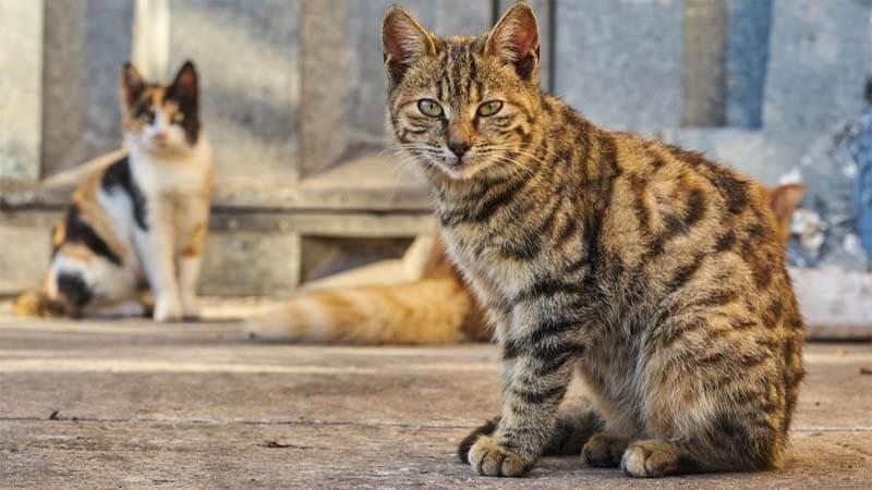 Cara Mengusir Kucing di Rumah