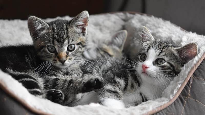 Lingkungan untuk Anak Kucing