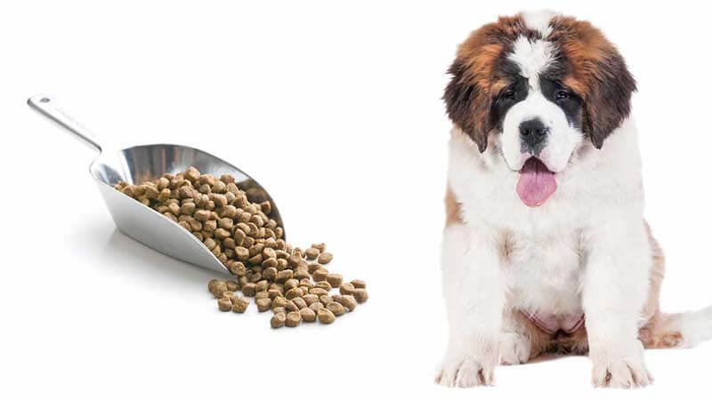 Makanan Anjing Saint Bernard