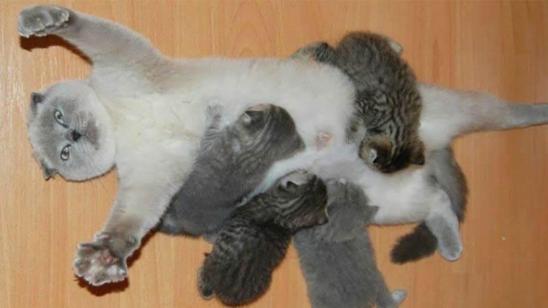 Makanan Kucing Anggora Berdasarkan Umur
