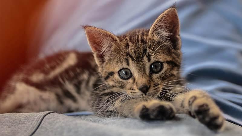 Merawat Anak Kucing