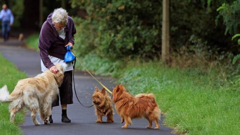 Sosialisasi Anjing