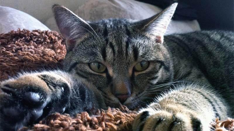 cara mengobati kucing sakit flu