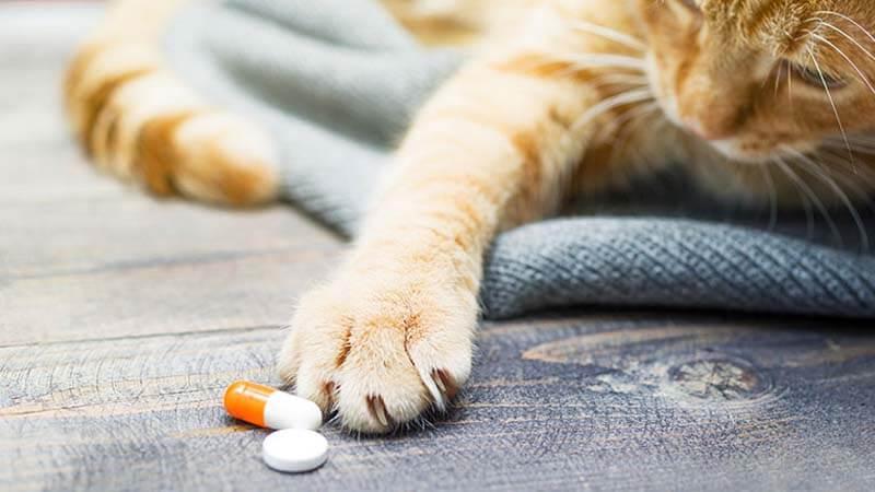 multivitamin kucing