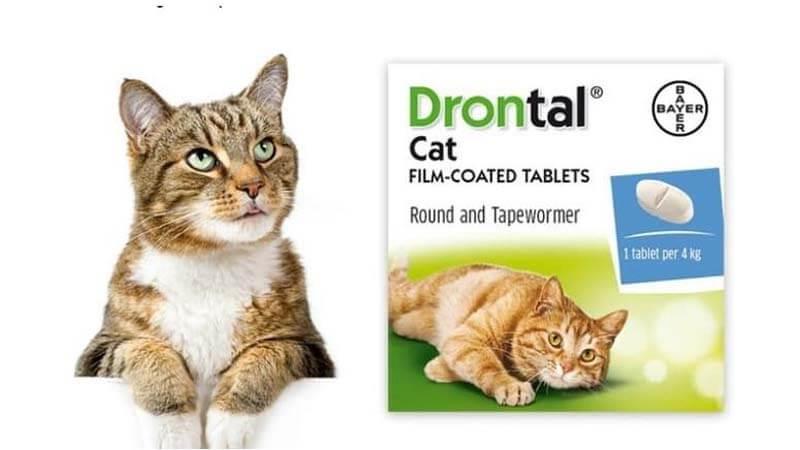 obat kucing sakit cacingan