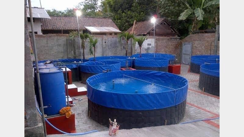 Lingkungan untuk Budidaya Ikan Hias